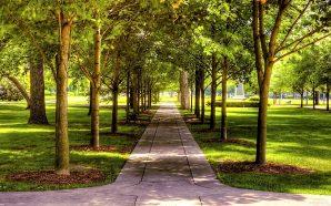 На утримання парків Львова витратять 14 мільйонів гривень