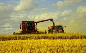 Україну очікує рекордний урожай