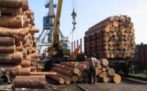 Україна експортувала півтори мільйони тон паливної деревини