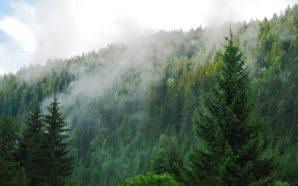 На ведення лісового господарства торік витратили 7 мільярдів гривень