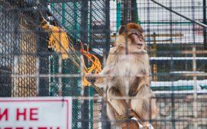 Понад 100 мавп та 40 великих кішок: історія і сьогодення…