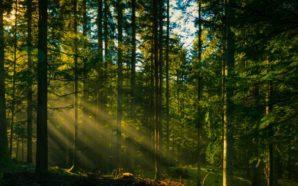 Лісівники на Львівщині відновили 1983 га лісів