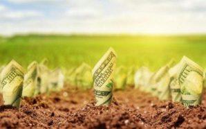 У Раді зареєстрували законопроект про детінізацію сільгоспвиробництва
