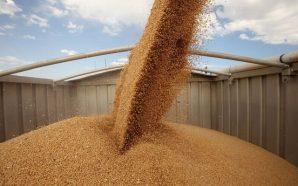 Урожай-2019: В Україні вже зібрано понад 75 млн тонн зерна
