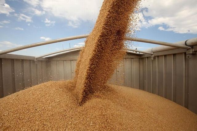 В Україні вже зібрали зерна з понад 6 млн га…