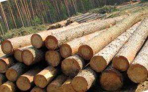 Держлісагентство відкрило статистику цін та е-аукціон на деревину